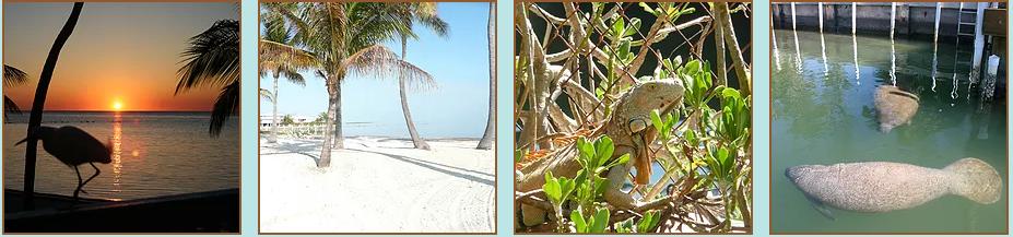 Matecumbe Resort Islamorada